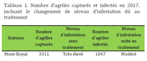 Tableau agrile du frene - Mont-Royal